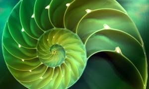 NAUTILUS-verde